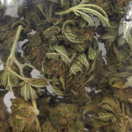 BLUE Gorilla Glue 14g – Cascade Herb Company