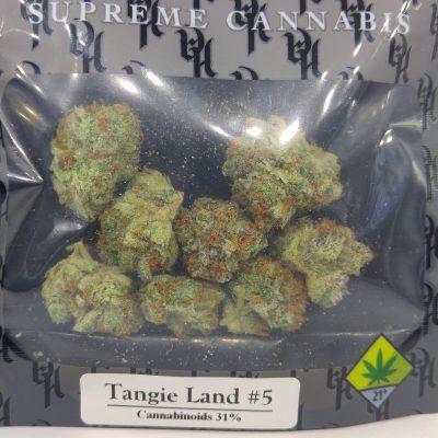DOG Tangie Land #5 1g